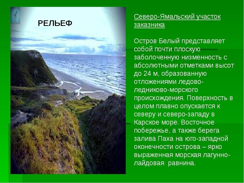 Северо-Ямальский участок заказника Остров Белый представляет собой почти плос...