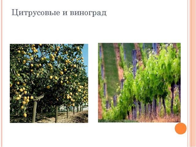 Цитрусовые и виноград