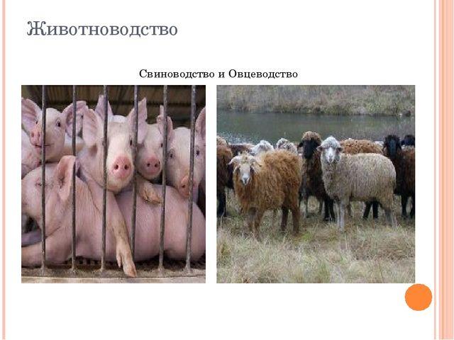 Животноводство Свиноводство и Овцеводство