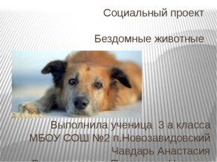 Социальный проект Бездомные животные Выполнила ученица 3 а класса МБОУ СОШ №2