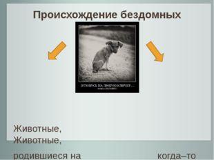 Происхождение бездомных животных Животные, Животные, родившиеся на когда–то и
