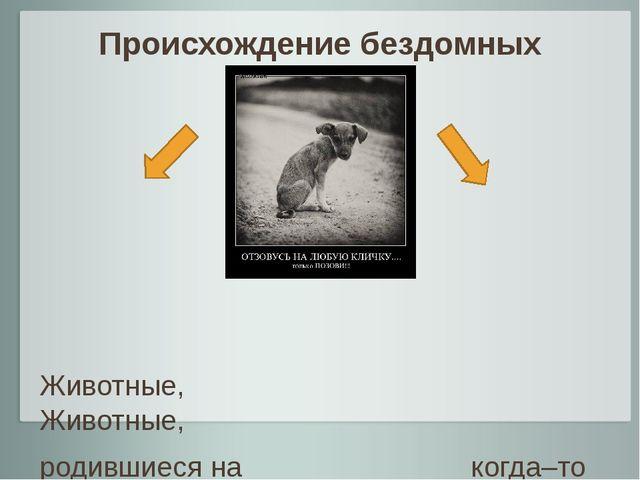 Происхождение бездомных животных Животные, Животные, родившиеся на когда–то и...