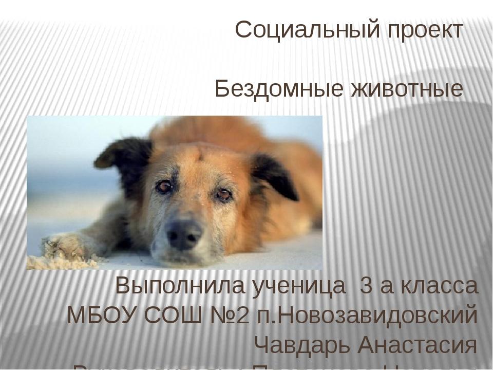 Социальный проект Бездомные животные Выполнила ученица 3 а класса МБОУ СОШ №2...