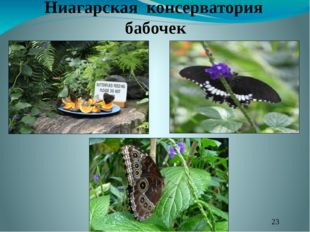 Ниагарская консерватория бабочек
