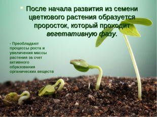 После начала развития из семени цветкового растения образуется проросток, кот