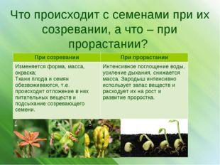 Что происходит с семенами при их созревании, а что – при прорастании? При соз