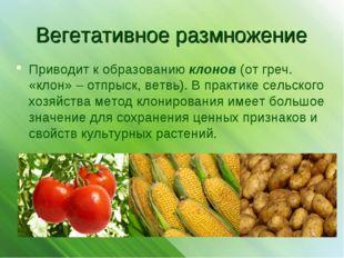 Вегетативное размножение Приводит к образованию клонов (от греч. «клон» – отп