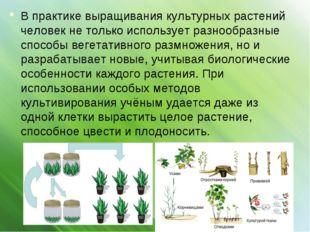В практике выращивания культурных растений человек не только использует разно