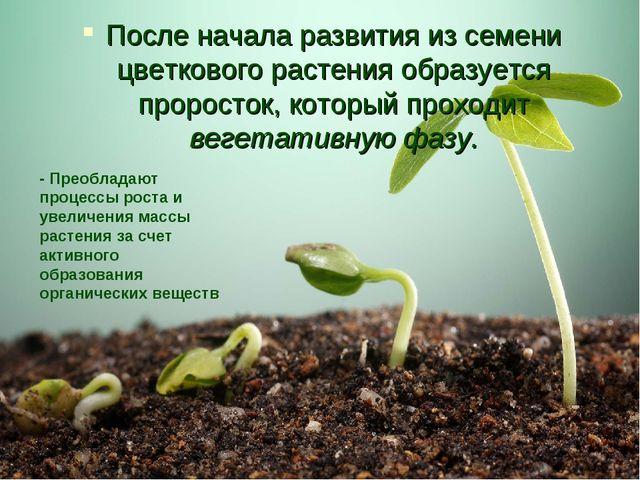 После начала развития из семени цветкового растения образуется проросток, кот...