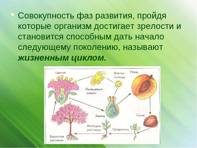 Совокупность фаз развития, пройдя которые организм достигает зрелости и стано...