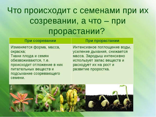 Что происходит с семенами при их созревании, а что – при прорастании? При соз...