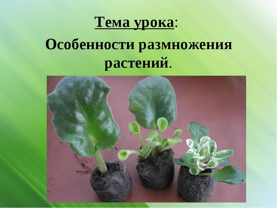 Тема урока: Особенности размножения растений.