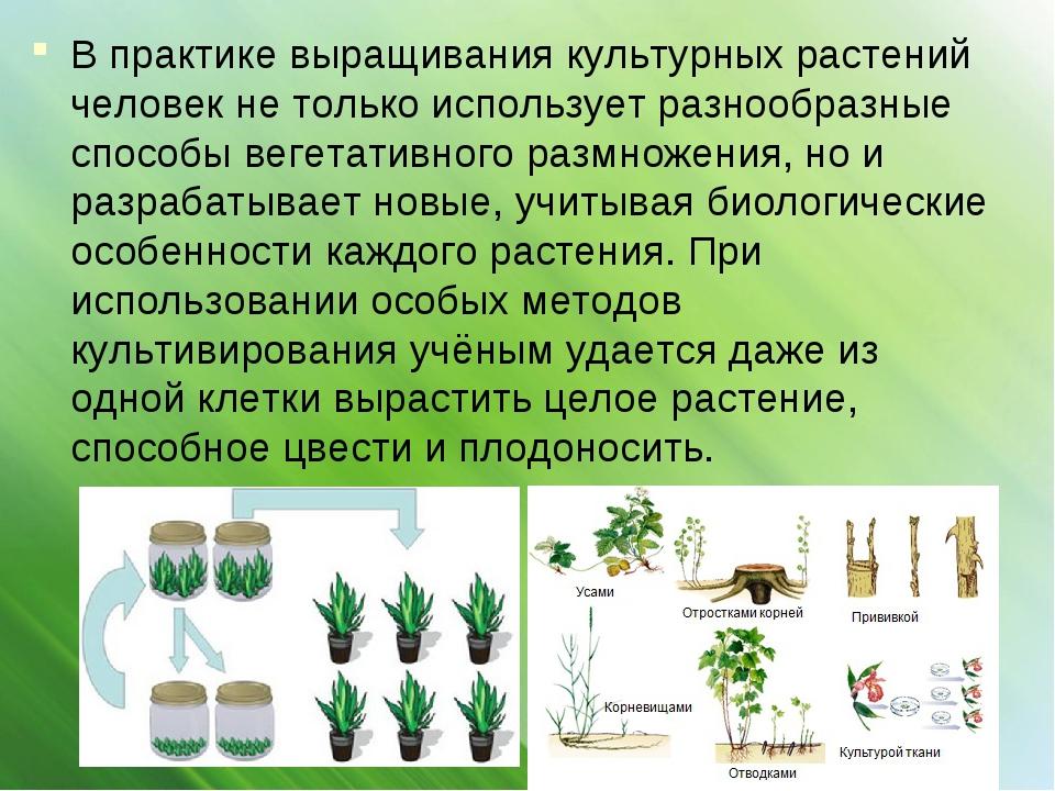 В практике выращивания культурных растений человек не только использует разно...