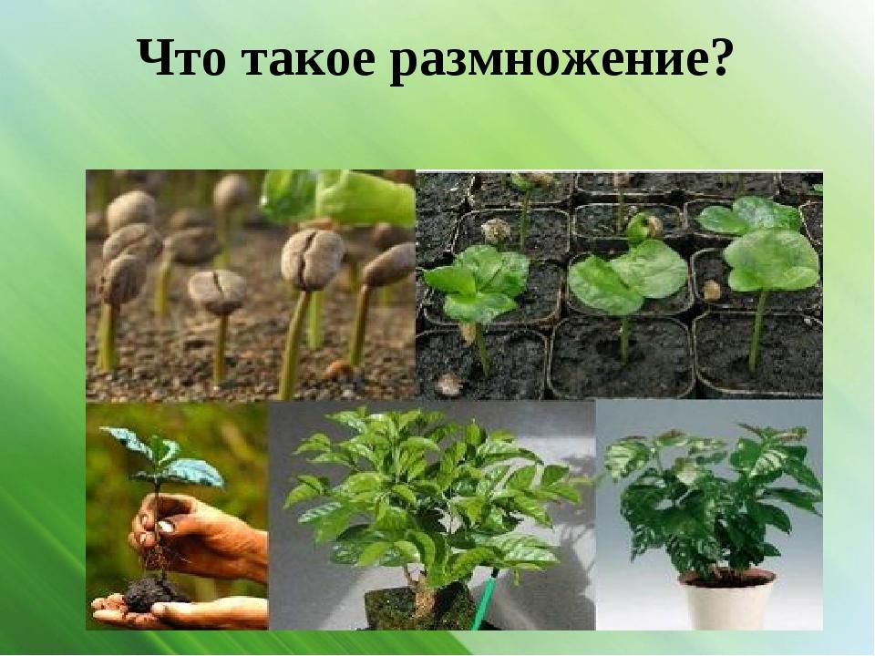Что такое размножение?