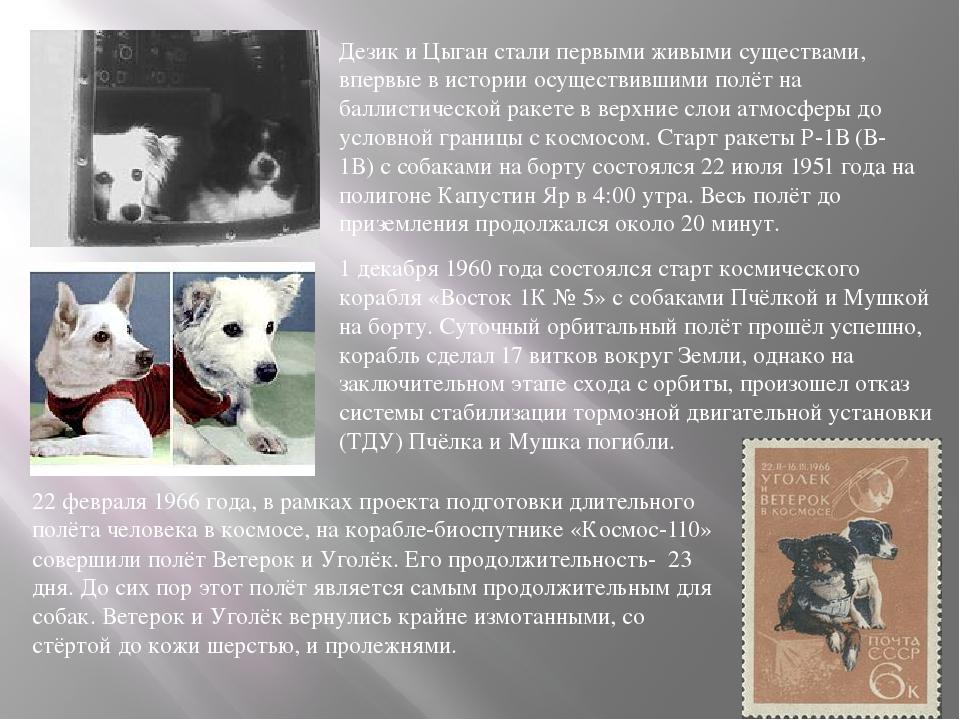 Дезик и Цыган стали первыми живыми существами, впервые в истории осуществивши...