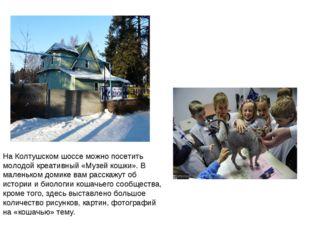 На Колтушском шоссе можно посетить молодой креативный «Музей кошки». В малень