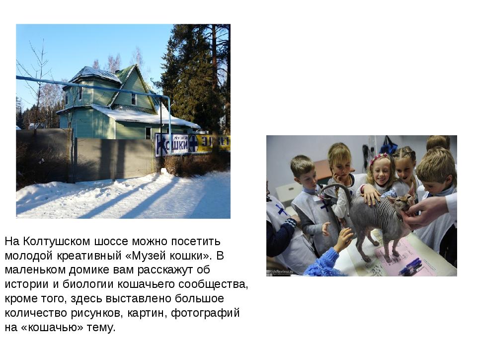 На Колтушском шоссе можно посетить молодой креативный «Музей кошки». В малень...