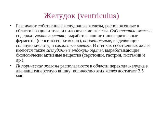 Желудок (ventriculus) Различают собственные желудочные железы, расположенные...