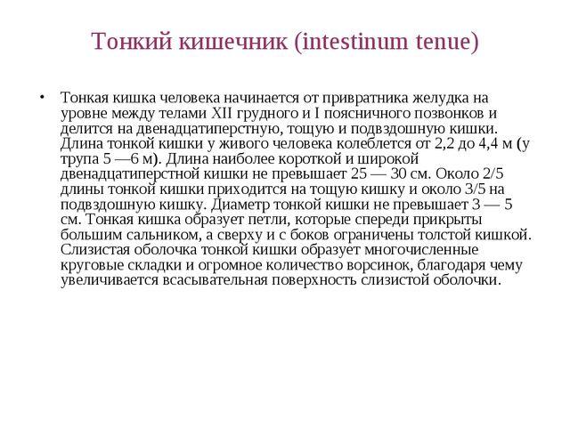 Тонкий кишечник (intestinum tenue) Тонкая кишка человека начинается от привра...