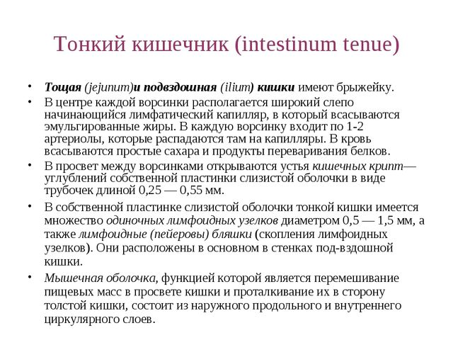 Тонкий кишечник (intestinum tenue) Тощая (jejunum)и подвздошная (ilium) кишки...