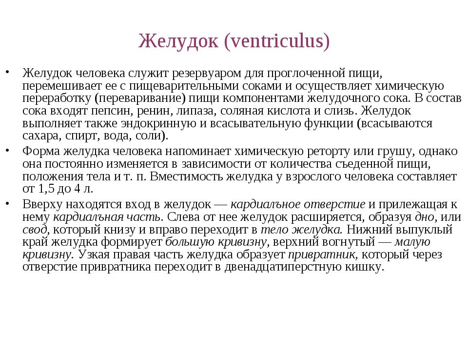 Желудок (ventriculus) Желудок человека служит резервуаром для проглоченной пи...
