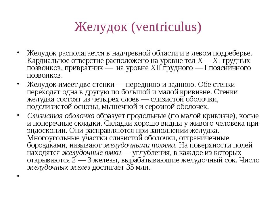 Желудок (ventriculus) Желудок располагается в надчревной области и в левом по...