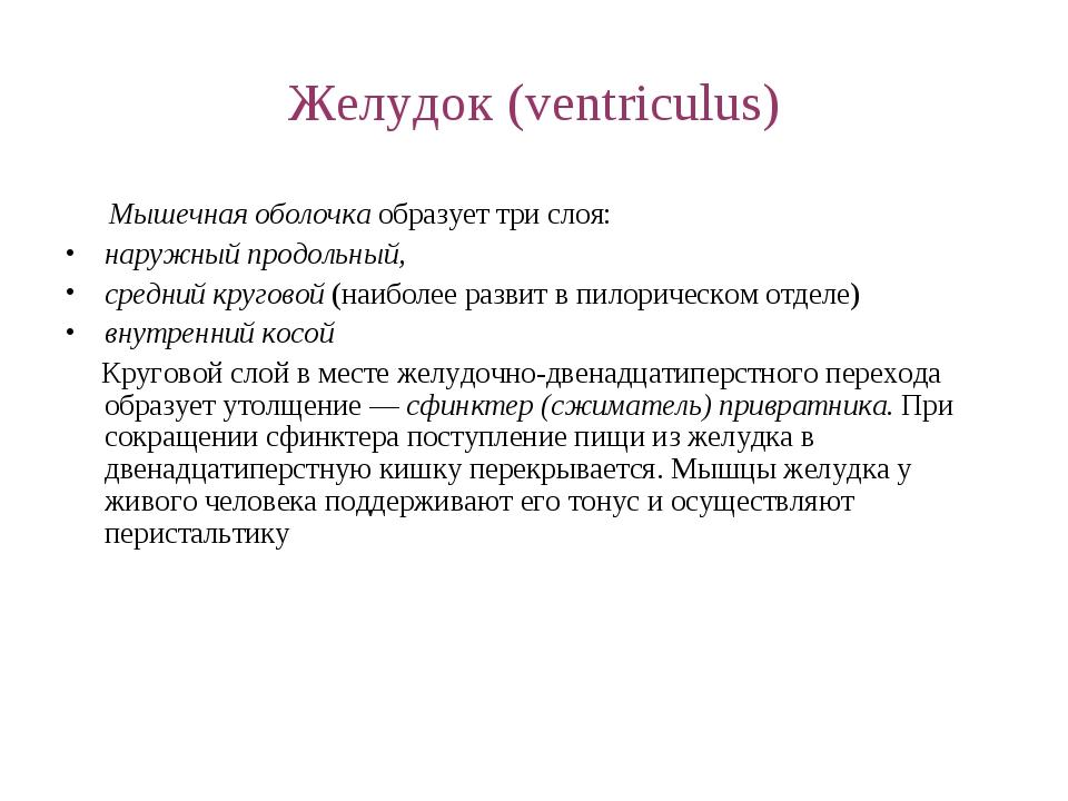 Желудок (ventriculus) Мышечная оболочка образует три слоя: наружный продольны...