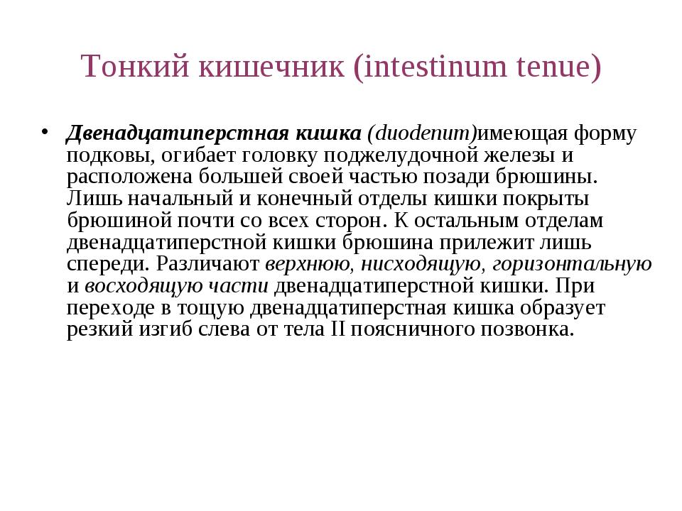 Тонкий кишечник (intestinum tenue) Двенадцатиперстная кишка (duodenum)имеющая...