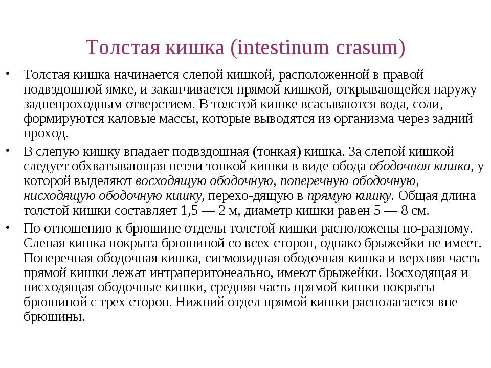 Толстая кишка (intestinum crasum) Толстая кишка начинается слепой кишкой, рас...