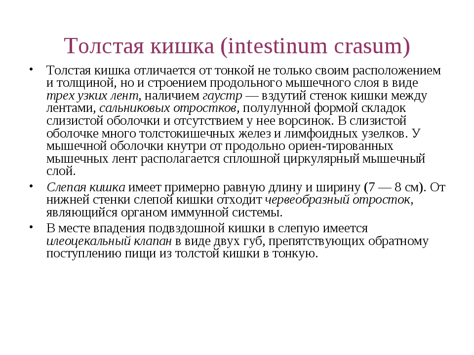 Толстая кишка (intestinum crasum) Толстая кишка отличается от тонкой не тольк...