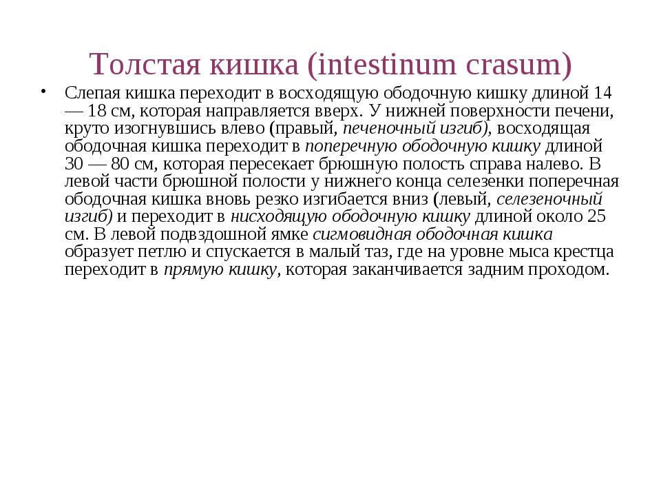 Толстая кишка (intestinum crasum) Слепая кишка переходит в восходящую ободочн...