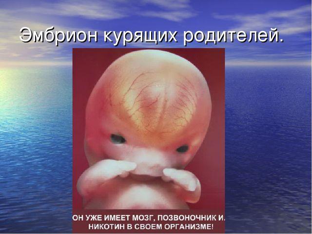Эмбрион курящих родителей.