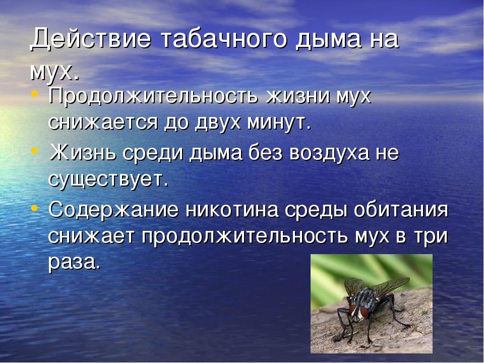 Действие табачного дыма на мух. Продолжительность жизни мух снижается до двух...