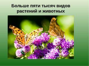 Больше пяти тысяч видов растений и животных