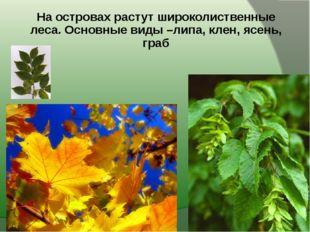 На островах растут широколиственные леса. Основные виды –липа, клен, ясень, г