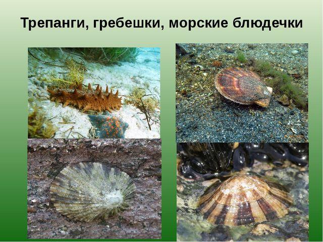 Трепанги, гребешки, морские блюдечки