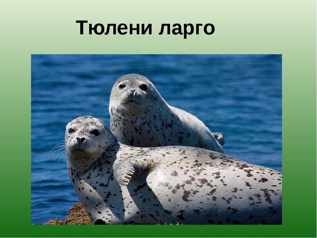 Тюлени ларго