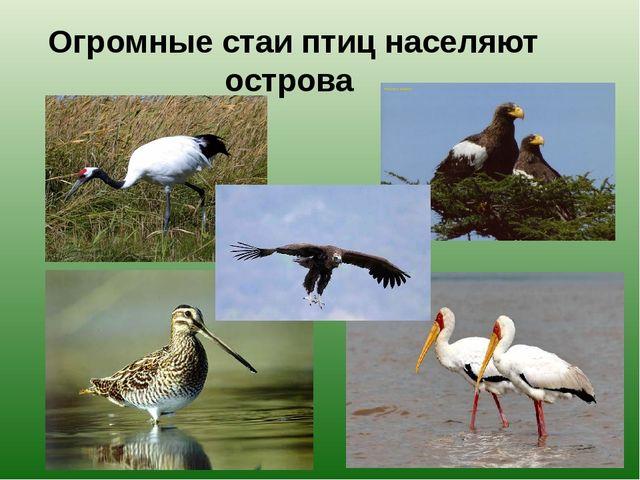 Огромные стаи птиц населяют острова