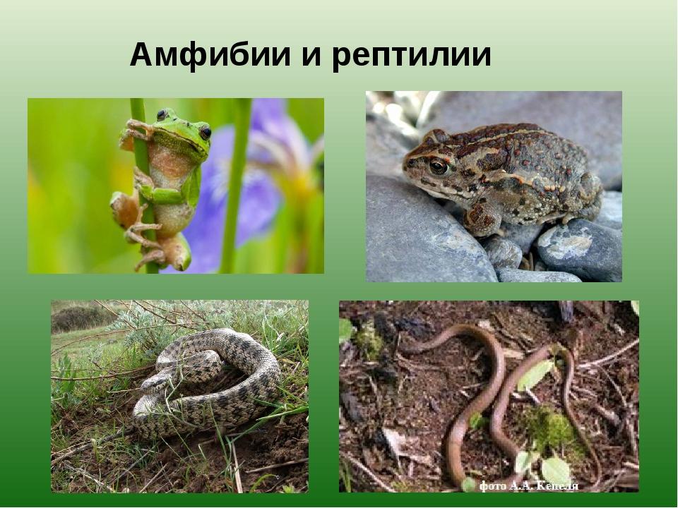 Амфибии и рептилии