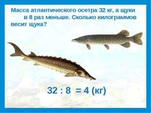 Масса атлантического осетра 32 кг, а щуки в 8 раз меньше. Сколько килограммо