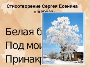 Стихотворение Сергея Есенина « Берёза» Белаябереза Подмоимокном Принакрыла