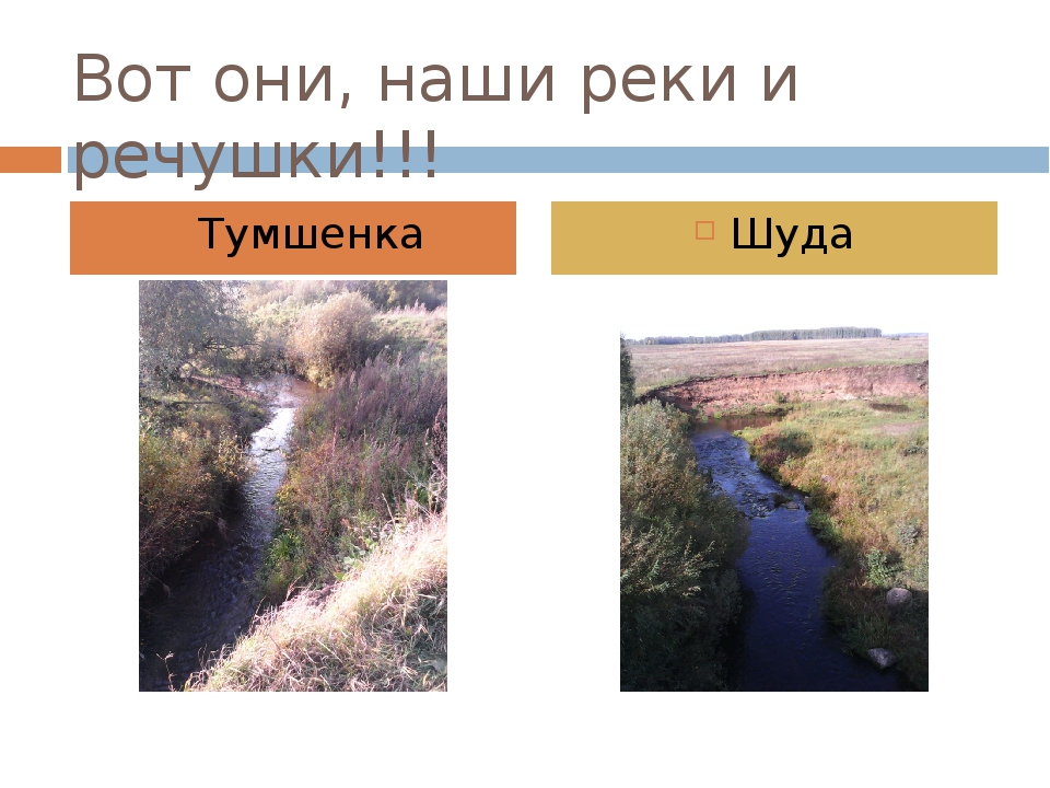 Вот они, наши реки и речушки!!! Тумшенка Шуда