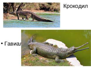Крокодил Гавиал