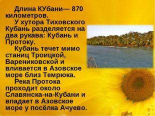 Длина КУбани— 870 километров. У хутора Тиховского Кубань разделяется на два р