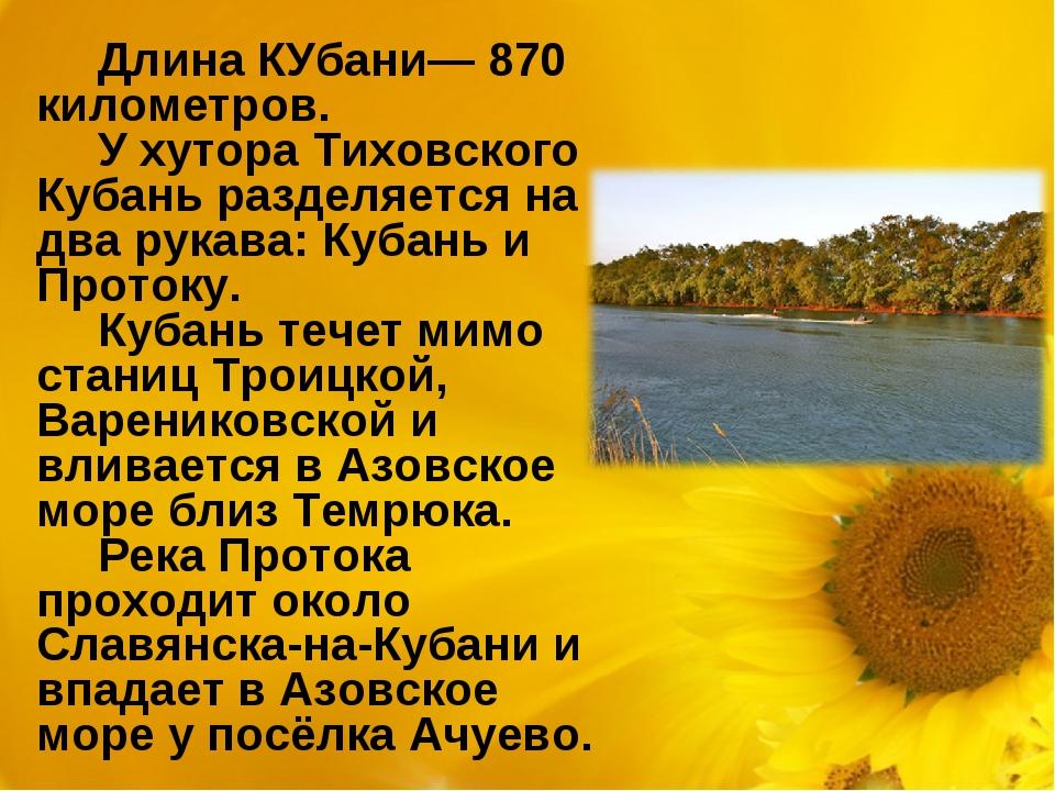 Длина КУбани— 870 километров. У хутора Тиховского Кубань разделяется на два р...