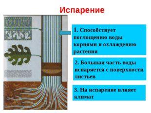 Испарение 1. Способствует поглощению воды корнями и охлаждению растения 2. Б