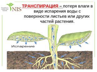 Топтық жұмыс 1-топ Өсімдіктердің суды буландыратынын дәлелдеңдер 2-топ Судың