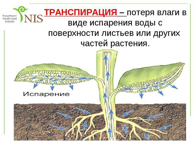 Топтық жұмыс 1-топ Өсімдіктердің суды буландыратынын дәлелдеңдер 2-топ Судың...