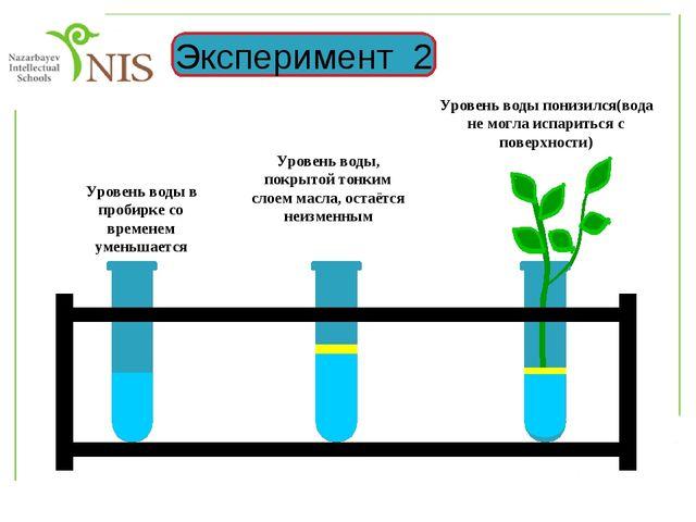Эксперимент 2 Уровень воды в пробирке со временем уменьшается Уровень воды, п...