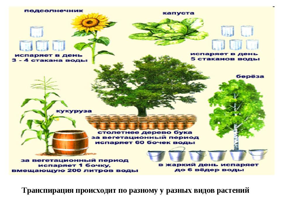 Транспирация происходит по разному у разных видов растений